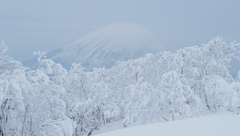 Rusutsu really is epic, both as a powder magnet and tree-skiing Mecca