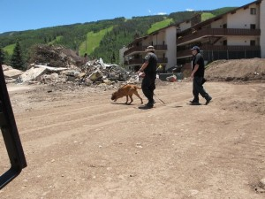 canine unit searches for bones in Vail